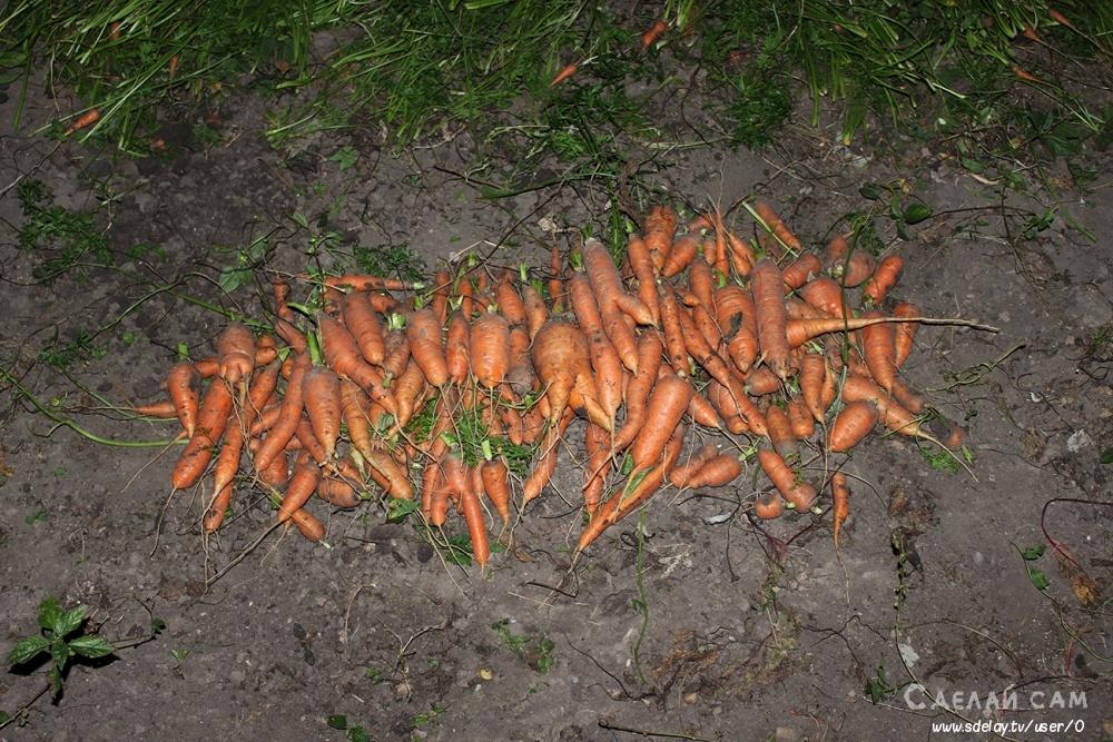Простой способ хранения овощей-НА ЗЕМЛЕ