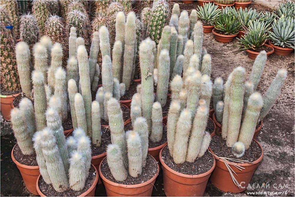 Кактус для дома: 15 идеальных видов