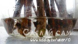 Выращивание винограда из черенков: практические рекомендации