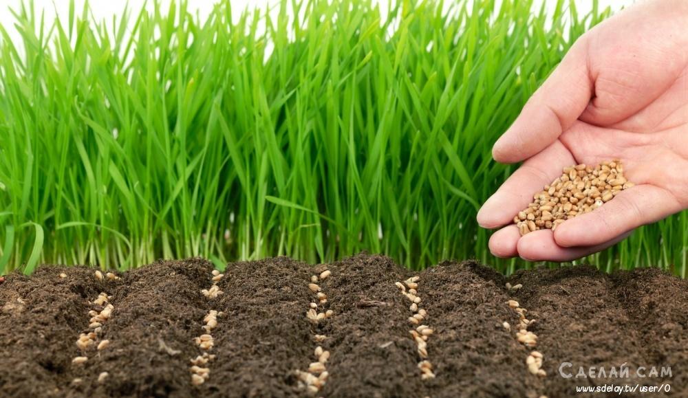 Осенние работы на огороде: чем заняться ?