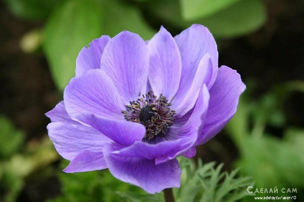 ТОП 7 растений, для альпийской горки на вашем участке