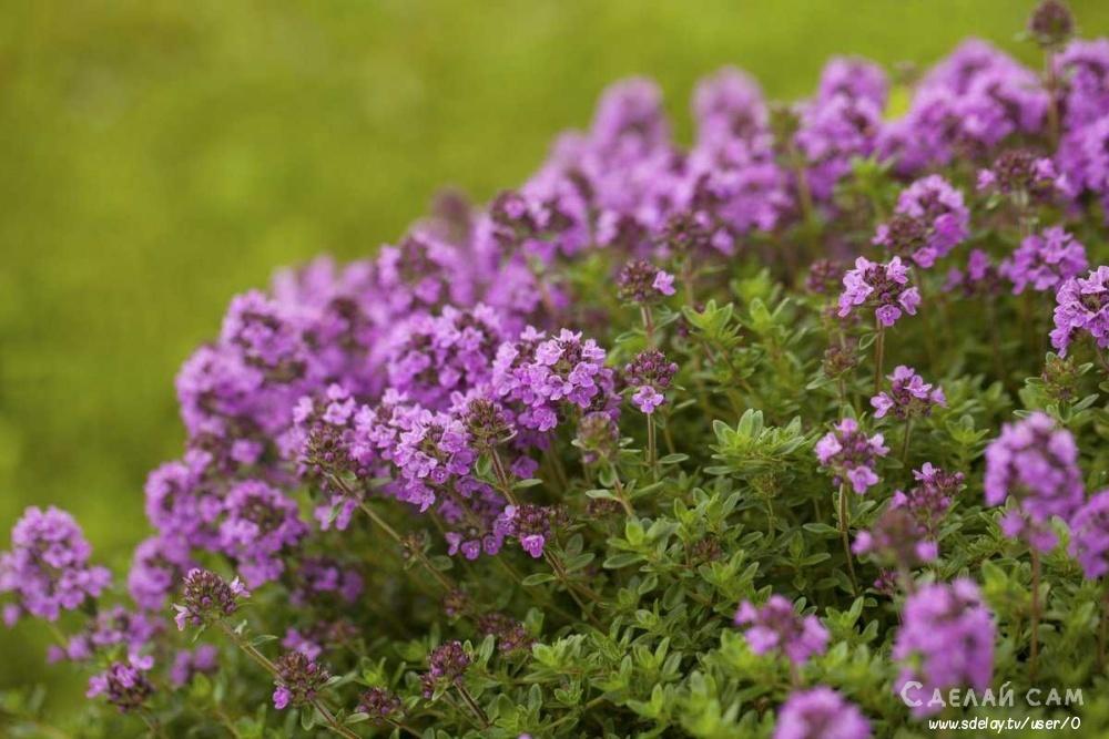 Какие растения сажать для отпугивания насекомых? Список