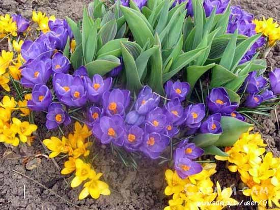 7 декоративных растений для оформления клумбы