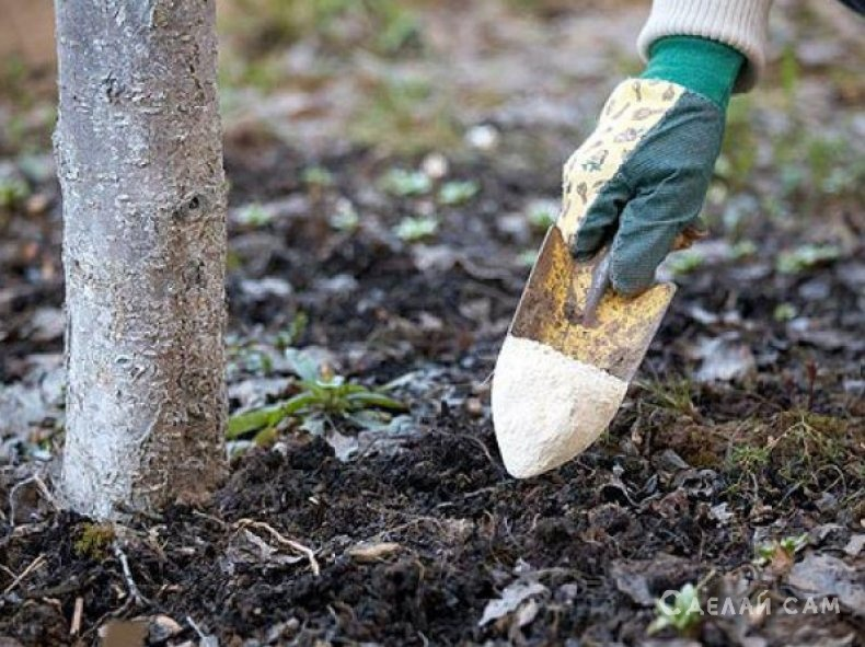 Особенности внесения удобрений для подкормки плодовых культур