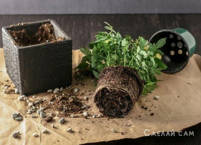 Как правильно пересадить растение в горшок после покупки?