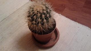 уход за кактусом