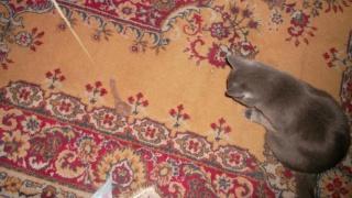 это мой кот Барон