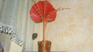Пальмовый цветок