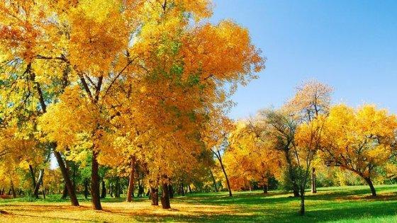 Осень как ты прекрасна