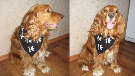 DIY Стильный шейный платок для собаки. Мастер-класс \ Stylish scarf for dog \ Tutorial