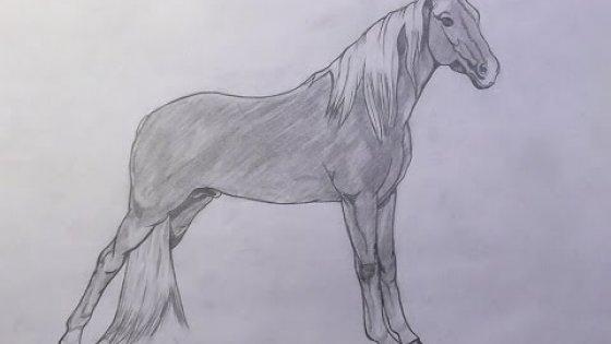 Рисунки простым карандашом / Drawings in pencil